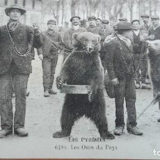 Postales: RARISIMA POSTAL OSO OSOS Nº 6482 LES OURS DU PAYS DEPT 65 HAUTES PYRENEES PERFECTA CONSERVA ANIMALES. Lote 121611067