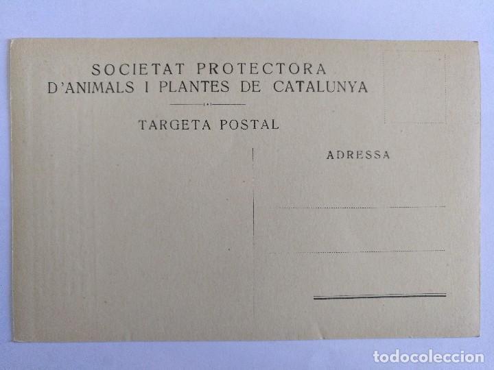 Postales: POSTAL SOCIETAT PROTECTORA DANIMALS I PLANTES DE CATALUNYA EL CAVALL AÑOS 30 SIN CIRCULAR - Foto 2 - 125278343