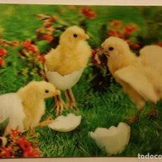 Postales: POSTAL TRIDIMENSIONAL POLLITOS . Lote 126037295