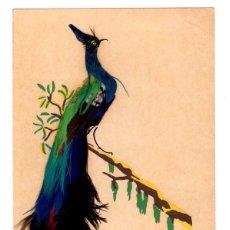 Postales: TARJETA POSTAL CON AVE EXOTICA. PLUMAS EN RELIEVE, AÑO 1952. Lote 127088492