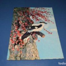 Postales: POSTAL SIN CIRCULAR - PAJARO - EDITA ISV 63. Lote 127495671
