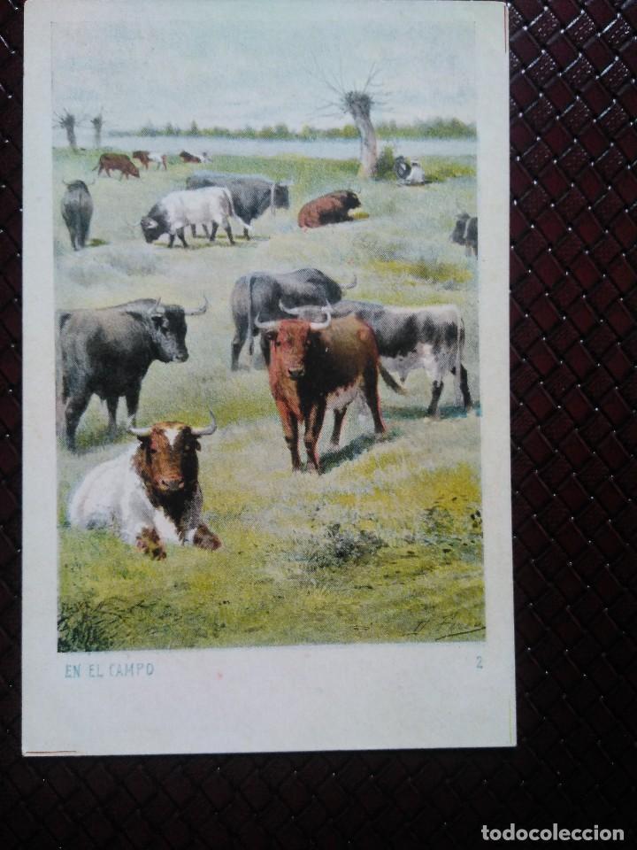 TARJETA POSTAL ARTÍSTICA ESPAÑOLA. EN EL CAMPO. 2 . SIN DIVIDIR. SIN CIRCULAR. (Postales - Postales Temáticas - Animales)
