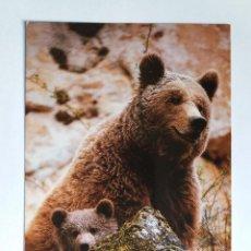 Postales: POSTAL - ANIMALES - OSO PARDO - FONDO NATURAL SL. Lote 128343803