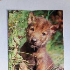 Postales: POSTAL - ANIMALES - LOBO IBERICO - FONDO NATURAL SL. Lote 128344183