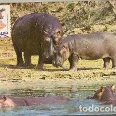 Postales: MOZAMBIQUE & POSTALE MAXIMO, HIPPOPOTAMUS AMPHIBIUS, MAPUTO 1981 (7898) . Lote 128359151