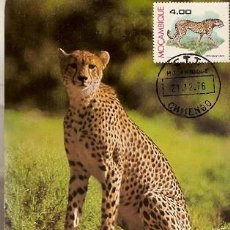 Postales: MOZAMBIQUE & POSTAL MAXIMO, CHITA, ACINONYX JUBATUS, CHITENGO 1976 (9667). Lote 128361507