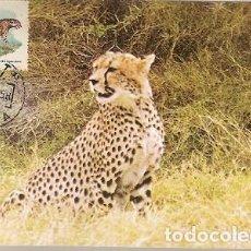 Postales: MOZAMBIQUE & POSTAL MAXIMO, CHITA, ACINONYX JUBATUS, BEIRA 1976 (9666) . Lote 128361983