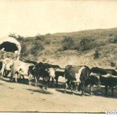 Postales: CARRO TIRADO POR 8 BUEYES-FOTOGRÁFICA-- MUY RARA. Lote 128592519