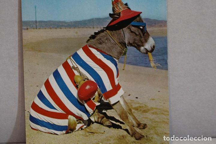 POSTAL ANIMALES CÓMICOS/ BURRO EN LA PLAYA Nº 3 QUE RICA ES! A.SUBIRATS CASANOVAS 1962-FISA (Postales - Postales Temáticas - Animales)