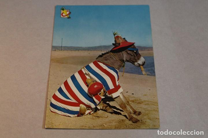 Postales: Postal Animales Cómicos/ Burro en la playa nº 3 Que rica es! A.Subirats Casanovas 1962-Fisa - Foto 2 - 129020103