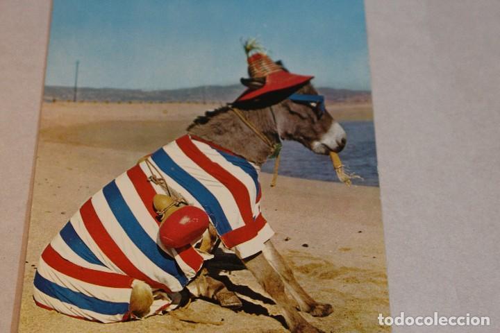 Postales: Postal Animales Cómicos/ Burro en la playa nº 3 Que rica es! A.Subirats Casanovas 1962-Fisa - Foto 3 - 129020103