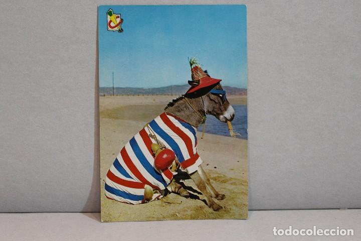 Postales: Postal Animales Cómicos/ Burro en la playa nº 3 Que rica es! A.Subirats Casanovas 1962-Fisa - Foto 5 - 129020103