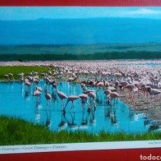 Postales: BONITA POSTAL FLAMENCOS GREATER FLAMINGOES AFRICA AÑOS 70 ANIMALES JOHN HINDE. Lote 130806443