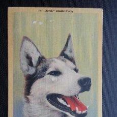 Postales: POSTAL ANTIGUO PERROS . HUSKY ALASKA. ANVIK. Lote 133134314