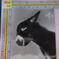 Postales: POSTAL DE ANIMALES. AÑOS 30 50. BURRO BURRITO. AY QUE GRACIOSO . 1812. Lote 133494302