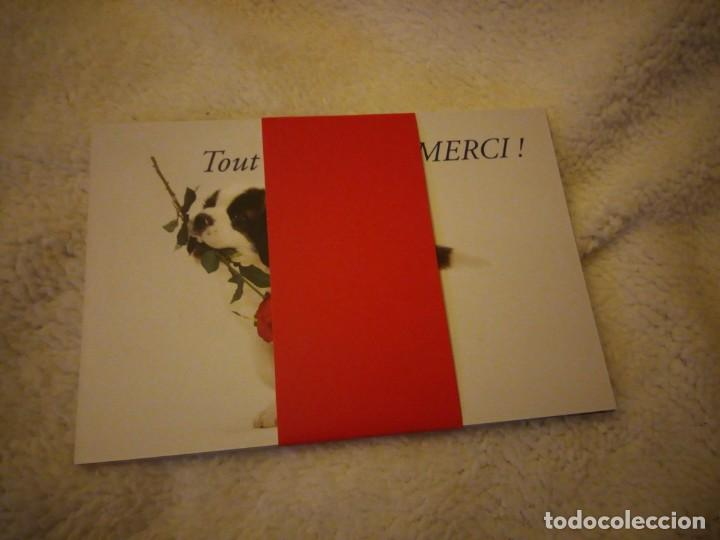 Postales: Lote de 6 postales de perros .nuevas - Foto 6 - 135613206