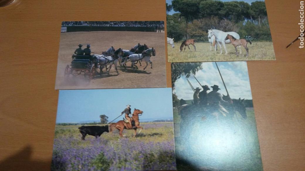 Postales: Serie de 8 postales el caballo en Andalucía - Foto 2 - 87464784