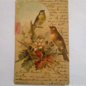 postal pájaros circulada
