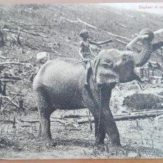 Postales: POSTAL ELEFANTES ASIATICOS Nº 395 ELEPHANT AT WORK EDIC PLATÉ & CO CEYLAN PERFECTA CONSERVACI. Lote 139955634