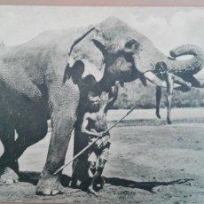 Postales: POSTAL ELEFANTES Nº 40 CEYLAN ELEPHANT NIÑO SOBRE LOS COLMILLOS DEL ELEFANTE PERFECTA CONSERVACION. Lote 139962366