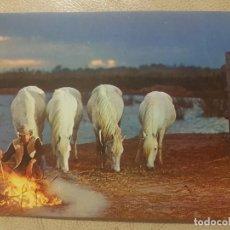 Postales: POSTAL SERIE CABALLOS Nº 2 SIN CIRCULAR, AÑOS 70.. Lote 140045974