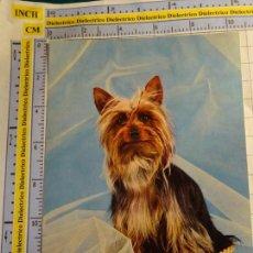 Postales: POSTAL DE ANIMALES. PERRO PERRITO. SILKY TERRIER. 800. Lote 143009422