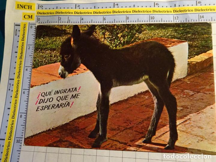 POSTAL DE ANIMALES. AÑO 1969 BURRO ASNO. 820 (Postales - Postales Temáticas - Animales)