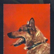 Postales: POSTAL DE ANIMALES: PERRO (ED.MEXICROME CC 2). Lote 143220694