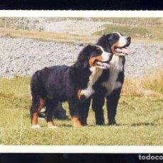 Postales: POSTAL DE ANIMALES: PERRO (ED. FOTOKARTE SVTU). Lote 143220766