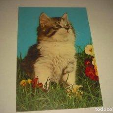 Postales: POSTAL GATO CYZ , 7224. SIN CIRCULAR.. Lote 143379658