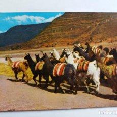 Postales: TARJETA POSTAL - PERU - LLAMAS EN LA SIERRA . Lote 143391846