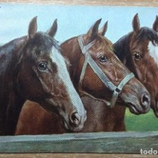 Postales: POSTAL DE 1903. Lote 143545670