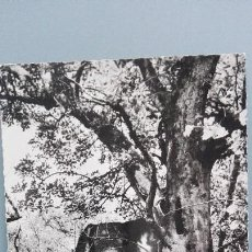 Postales: POSTAL BRILLO ELEFANTES ELEPHANTS ELEFANTE AFRICANO CON COLMILLOS AFRICA PERFECTA CONSERVACION. Lote 144827902
