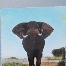 Postales: POSTAL COLOR BRILLO ELEFANTES ELEPHANTS ELEFANTE AFRICANO SABANA AFRICA PERFECTA CONSERVACI. Lote 144828058