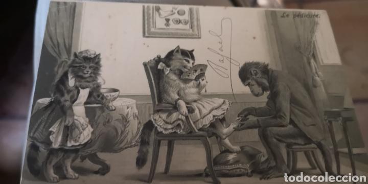 POSTAL TROQUELADA DE GATOS Y MONOS AÑO 1903 (Postales - Postales Temáticas - Animales)