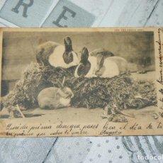 Postales: POSTAL DE CONEJOS - THE CHILDREN´S PETS 1904 - SELLO ALFONSO XIII. Lote 146120494