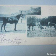 Postales: POSTAL CABALLOS REVERSO SIN DIVIDIR. Lote 146543930