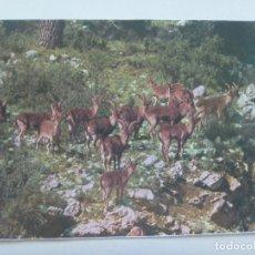 Postales: POSTAL DE MACHOS MONTESES, PARQUE NATURAL DE CAZORLA , SEGURA Y LAS VILLAS ( JAEN ). Lote 146795830