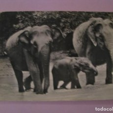 Postales: POSTAL PANDA, WORLD WILDLIFE FUND. WWF. ELEFANTE CEILANDES. SUIZA.. Lote 147096910