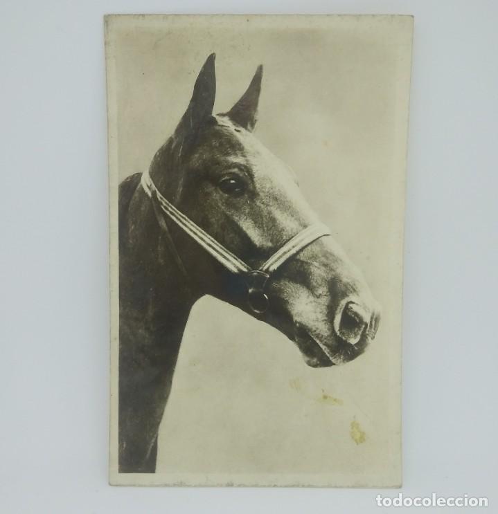 Postales: Postal caballo. Blanco y negro. - Foto 2 - 147377330