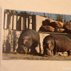 Postales: ZOO DE LA CASA DE CAMPO MADRID Nº 9 HIPOPOTAMO FAUNA AFRICANA NUEVA SIN CIRCULAR ED BERGAS. Lote 147820242