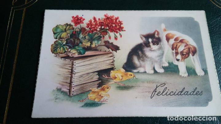 ANTIGUA POSTAL DE FELICITACIÓN ILUSTRADA CON GATO,PERRO, POLLITOS Y FLORES C Y Z - 517 FECHADA 1949 (Postales - Postales Temáticas - Animales)