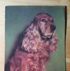 Postales: POSTAL DE COCKER SPANIEL 1965 . Lote 148047430