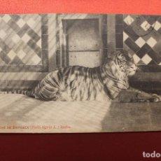 Postales: POSTAL TIGRE DE BENGALA, JUNTA MUNICIPAL DE CIENCIAS NATURALES, BARCELONA. Lote 148071086