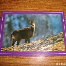 Postales: (ALB-TC-45) POSTAL TEMA ANIMALES SARRIO REBECO. Lote 149410706