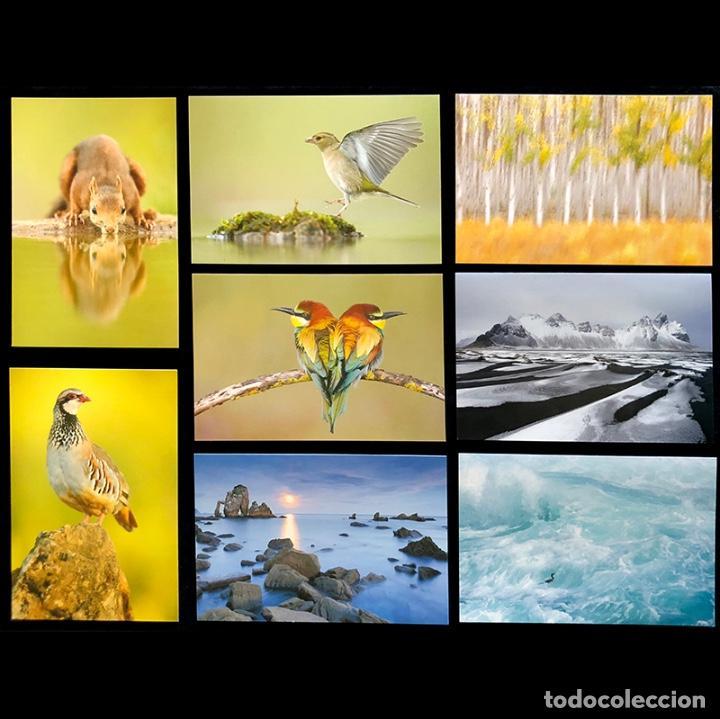 COLECCIÓN DE 8 POSTALES DE NATURALEZA. FOTOGRAFÍA. AUTOR: JOSE B. RUIZ. (Postales - Postales Temáticas - Animales)