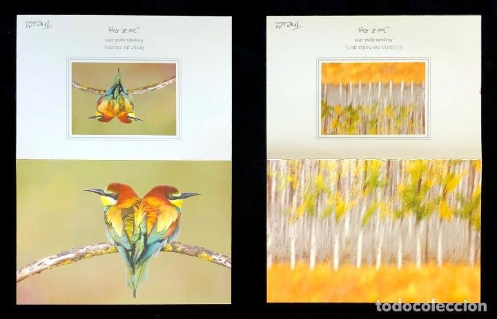 Postales: COLECCIÓN DE 8 POSTALES DE NATURALEZA. FOTOGRAFÍA. AUTOR: JOSE B. RUIZ. - Foto 2 - 152901380
