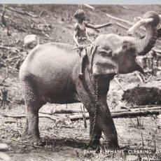 Postales: POSTAL BRILLO ELEFANTE ASIATICO TAME ELEPHANT CLEARING JUNGLE CEYLAN CEYLON ASIA PERFECTA CONSERV. Lote 155211618