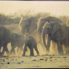 Postales: POSTAL FAMILIA DE ELEFANTES SELVA AFRICANA AFRICA AFRICAN ELEPHANTSRUNING PERFECTA CONSERVAC. Lote 155211946