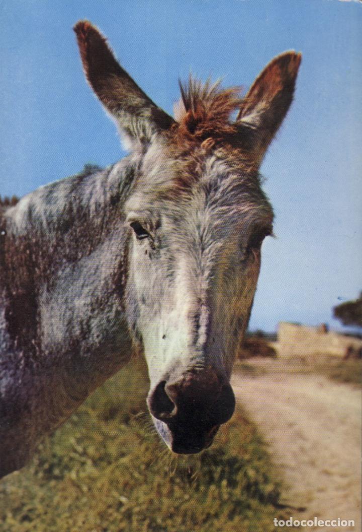 POSTAL SERIE II Nº 3428 BURRO - MULA- ASNO (Postales - Postales Temáticas - Animales)